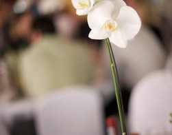 catering-weddings-005